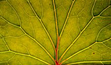 Free Leaf Closeup Stock Photo - 14639400