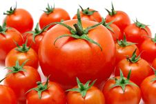 Free Set Of Tomatos Royalty Free Stock Photography - 14639687