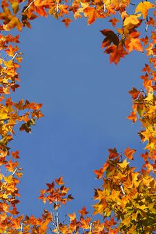 Free Maple Leaf Border Stock Photography - 14639712