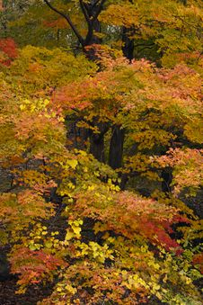 Free Autumn Forest Scene Stock Photo - 14639860