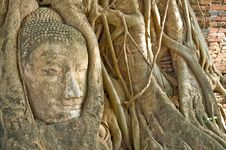 Free Head Of Buddha Statue In Tree, Ayutthaya Royalty Free Stock Photo - 14639945
