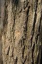 Free Bark Of Logs Stock Photo - 14640290