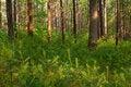 Free Woods Royalty Free Stock Photos - 14641478