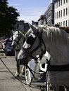 Free Horses And Carriage Royalty Free Stock Photos - 14648368