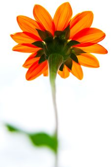 Flower Taken From Low Angle Stock Photography