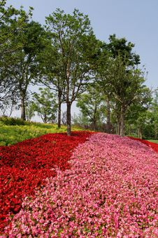 Flower Bed In Expo Park Stock Photography