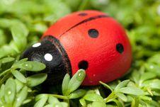 Free Toy Ladybug Royalty Free Stock Photo - 14642865