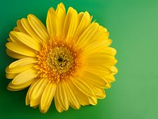 Free Yellow Flower Gerbera Stock Photos - 14644003