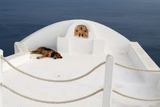 Free Dog Is On Holiday Royalty Free Stock Photography - 14644217