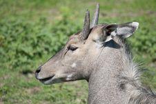 Free Antelope Nilgai Stock Photography - 14644232