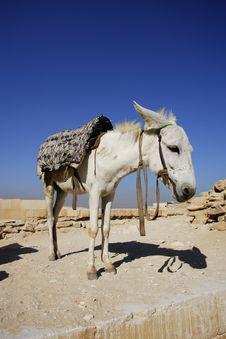 Free Donkey Under Brilliant Blue Sky Stock Photo - 14644500