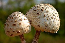 Free Mushroom Stock Image - 14644601