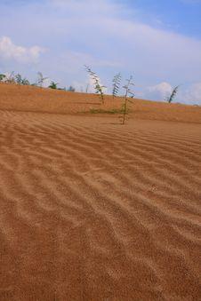 Free Sand Dune In Vietnam Stock Photo - 14645220