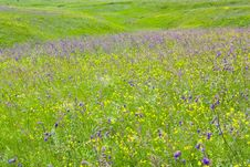 Free Blooming Meadow Royalty Free Stock Photo - 14645535