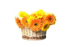Free Basket With Gerbera Flowers On White Stock Photos - 14647073