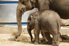 Free Mother Elephant With Her Baby Stock Image - 14649171