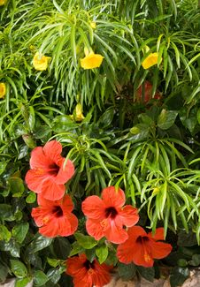 Free Red Flowers On Green Backgrond Royalty Free Stock Image - 14649266