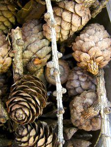 Pinecones Stock Photography