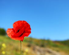 Free Poppy And Blue Sky Stock Photo - 14649840