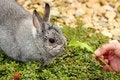 Free My Pet Little Rabbit Stock Image - 14651831
