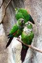 Free Parrots Stock Photo - 14658330