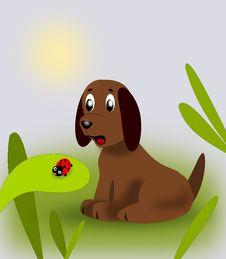 Free Puppy And Ladybug Stock Photo - 14650100