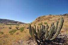 Free Namibia, Cacti Stock Images - 14651254