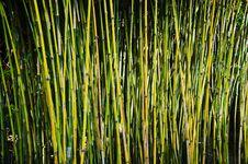 Free Bamboo Royalty Free Stock Photos - 14651608