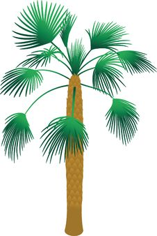 Free Tropical Palm Tree Stock Images - 14652494
