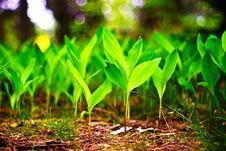 Free Wild Plant Stock Photos - 14652743