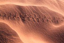 Free Dune-footprints Royalty Free Stock Image - 14653056