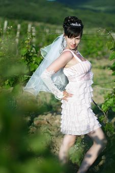 Free Bride In Vineyard Stock Photography - 14653072