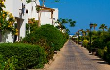 Free Green Park On Sinai Peninsula Stock Photos - 14653703