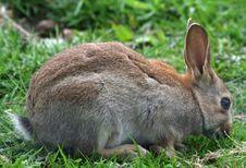 Free Bunny Rabbit Stock Image - 14655491