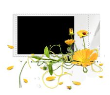 White Summer Frame With Marigold Stock Photos