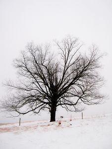 Free Tree In The Snow Stock Photo - 14657060