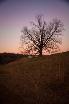 Free Tree At Sunset Royalty Free Stock Photos - 14657068