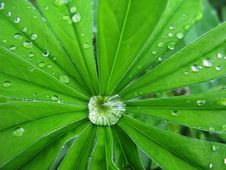 Free Drops  Water After  Rain Stock Photo - 14657810