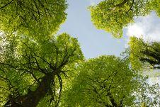 Free Spring Woodland Royalty Free Stock Photo - 14658215