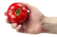 Free Got Tomato Stock Images - 14659344