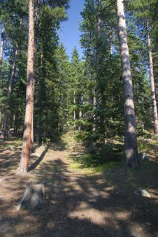 Free A West Coast Forest Dense Stock Photo - 14659680