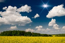 Free Finest Rapefield And Cloudscape. Royalty Free Stock Image - 14659896