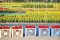 Free Nursery Garden Stock Photos - 14669463