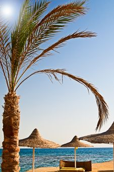 Beautiful Tropical Beach In The Egypt. Royalty Free Stock Photo
