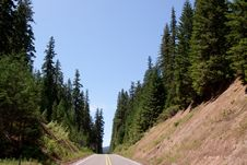 Free Road To The Forest Royalty Free Stock Photos - 14661268