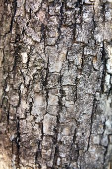 Free Background  Texture Of Bark Tree Royalty Free Stock Image - 14661516
