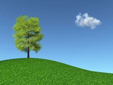 Free Tree On A Grassy Hill Royalty Free Stock Photography - 14663147