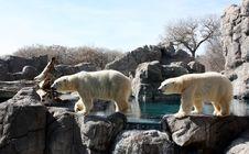 Free Polar Bear Parade Stock Photos - 14664293