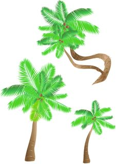 Free Set Of Tropical Palms Stock Images - 14666054