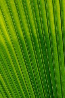 Free Green Leaf Royalty Free Stock Photo - 14666065